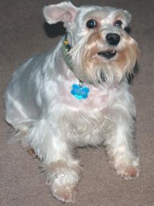 A freshly groomed girl.