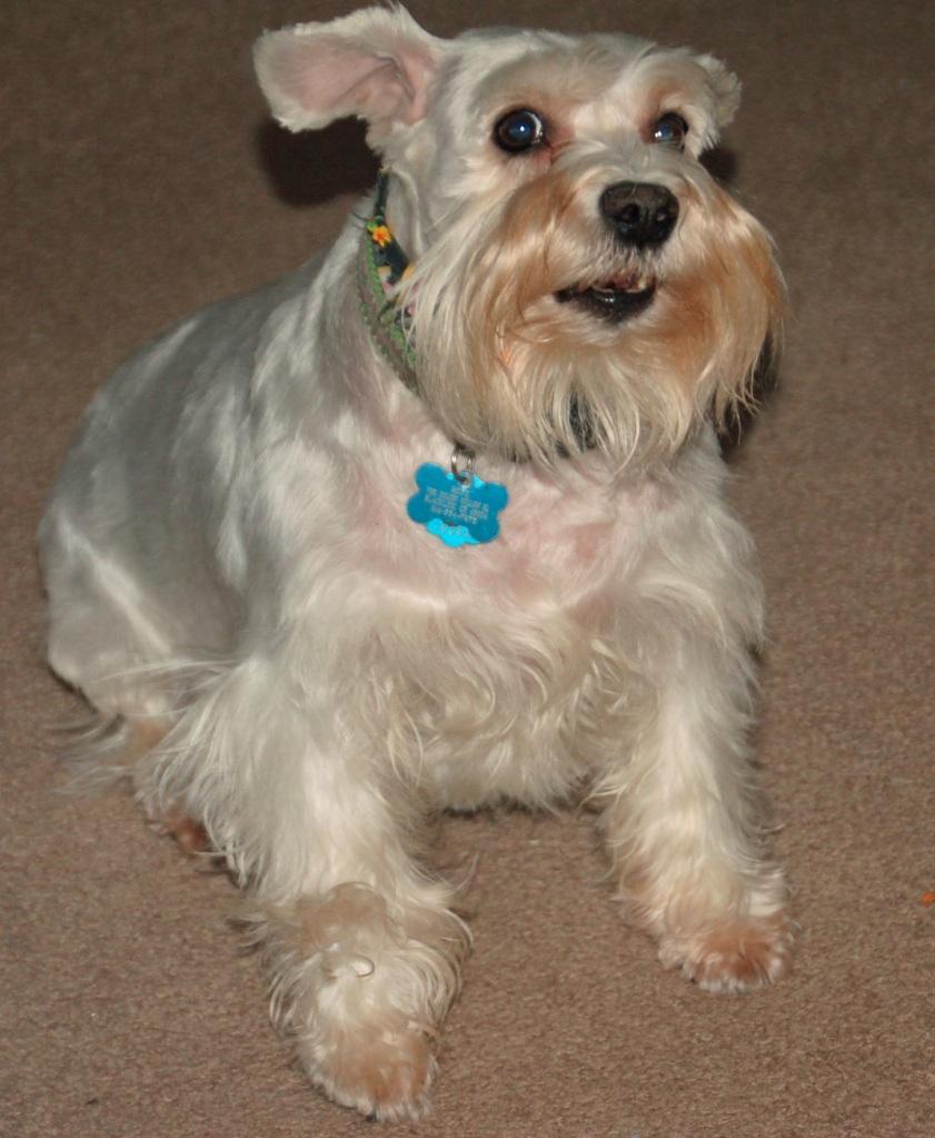 16029223 together with Stranglings Buddy Tucker Racism also Cincinnati Hosts Oktoberfest Zinzinnati September 22 23 2012 also 2408006162 further Dog Rescue Cincinnati. on weiner dog races cincinnati